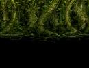 GrassMaze