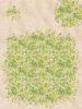 019-Sa_Grass02
