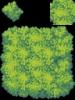 037-Tree02