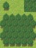 Forest2--Spivurno