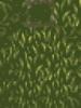 Suiko hohes gras